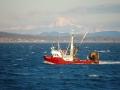 boats-0275